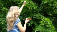 blond herbalist girl picking linden flowers herbs for herbal medicine video