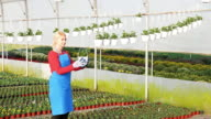 Blonde mature woman working with flowers in plant nursery video