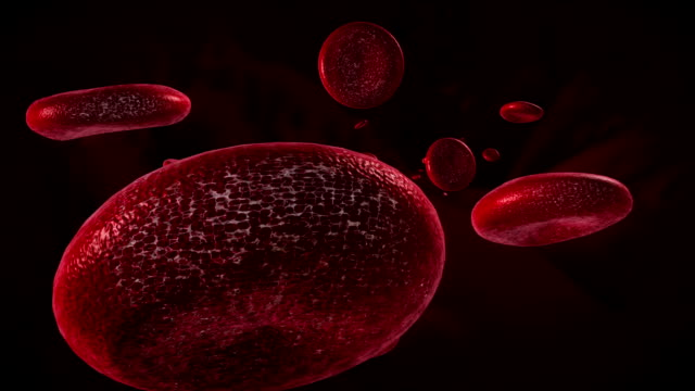 Blood cell 3D animation video