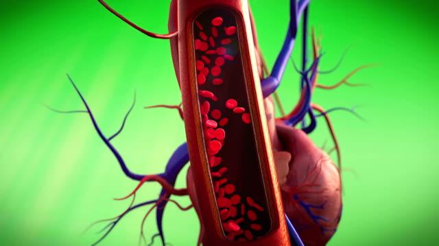blood, erythrocyte video
