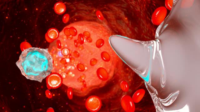 Blood flow in vessels video