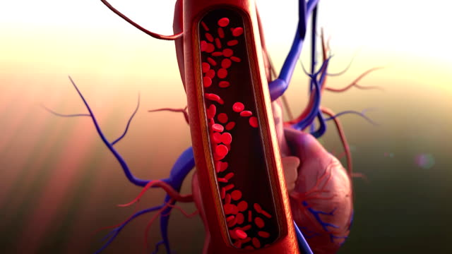 blood vessels, heart video