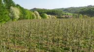 AERIAL Blooming apple trees in the orchard video