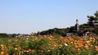 Blooming field video