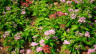 Blooming Flower Field in Summer video