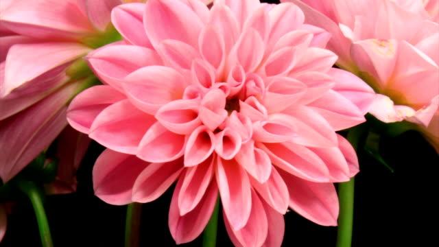 Blooming flowers video