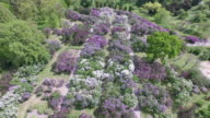 Blooming lilac in Botanic garden. Aerial view. video