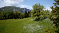 AERIAL: Blooming nature in spring video