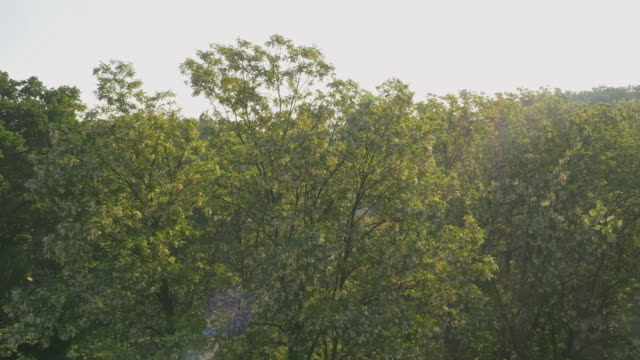 AERIAL Blooming trees in the morning video