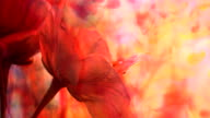 Blossom in multicoloured abstract background video