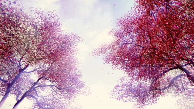 Blossoming cherry trees in sunshine video