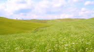 SLO MO Blossoming field in the Tuscany region video