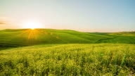 T/L Blossoming fields in the Tuscany region video