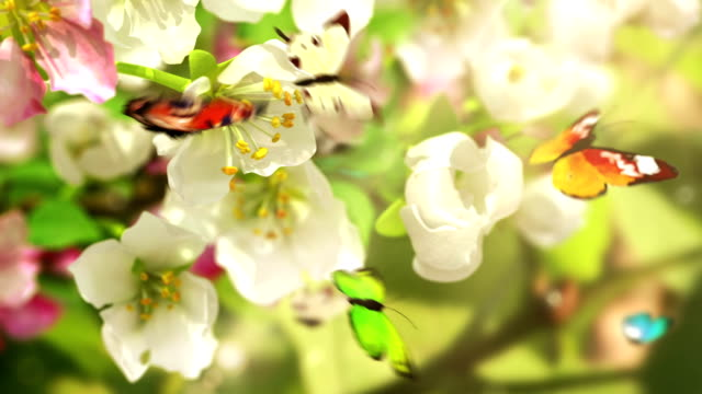 Blossoming flowers and butterflies video