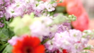 blossoming fres flowers in the garden video