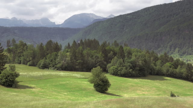 AERIAL Blossoming meadows surrounded by forest video