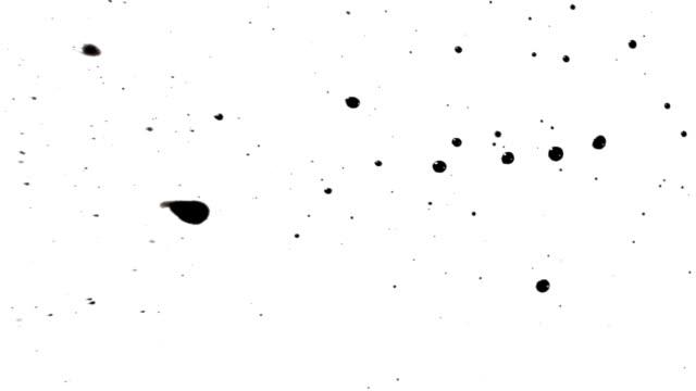 blot black video