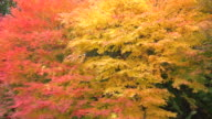 Blowing Autumn Leaves video