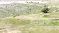 Blowing wind shakes a meadow throug tilt shift lens video