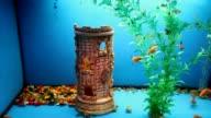 blue aquarium background calm fish swim grass video saver underwater video