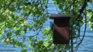 Blue Bird House video