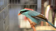 Blue bird video