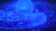 Blue box jellyfish video