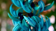 Blue flower video
