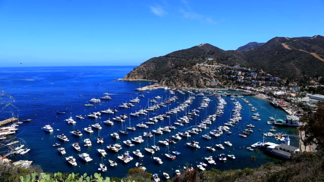 Blue harbor with anchored yachts in Catalina Island, California video
