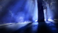 Blue misty forest video