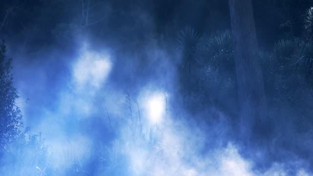 Blue misty New Zealand forest video