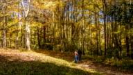 Blue Ridge Mountain Hiking Trial with People Walking in Autumn video