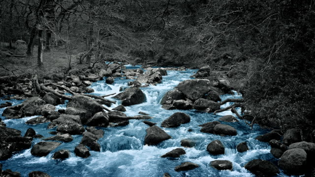 Blue River In Colorless Forest Abstract video