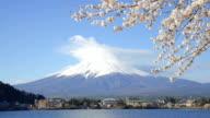 Blue Sky Mt Fuji and Lake Kawaguchi behind cherry blossoms video