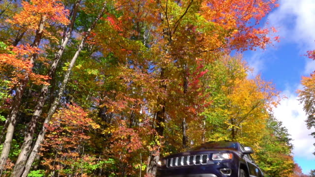 SLOW MOTION Blue SUV car driving through colorful forest, swirling autumn leaves video