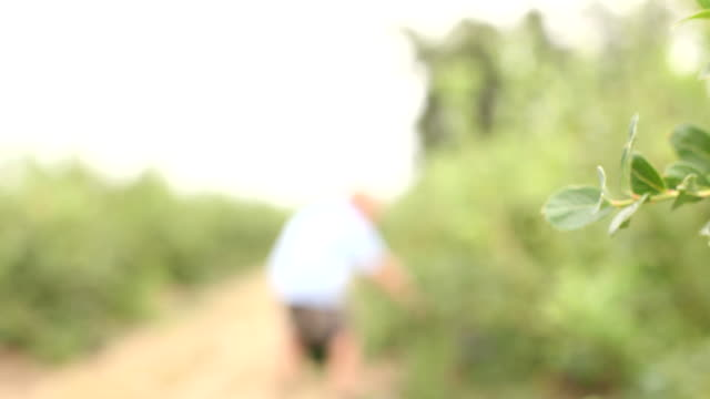 Blueberries closeup video