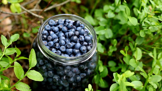 Blueberries video