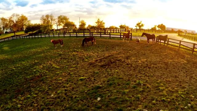 Bluegrass horse farm video