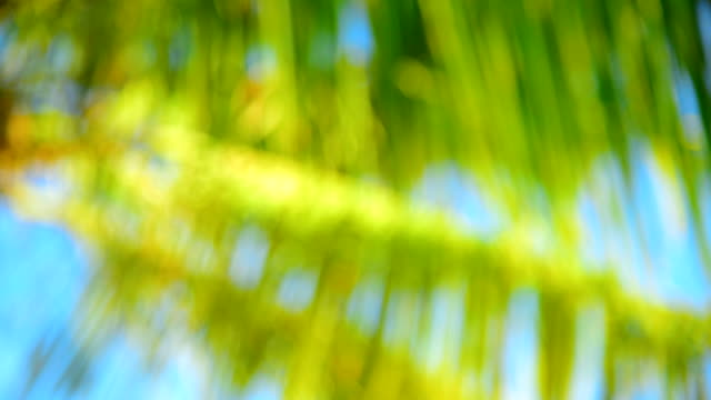 blur background of palm tree and blue sky video