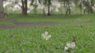 Blur human riding a bicycle with foreground of white flower on green grass in the park. video