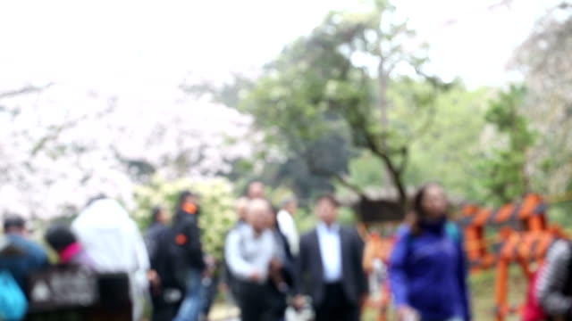 Blurred background of people viewing at sakura garden with cherry blossom. video
