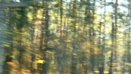 blurred car trip in sunny autumn forest road video