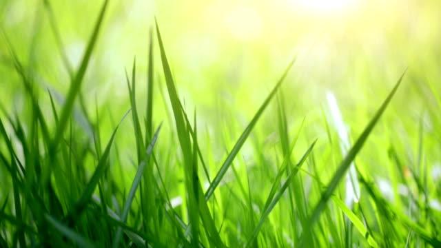 Blurred close-up grass video
