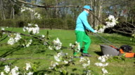 Blurred gardener mow lawn and fruit tree twigs blooms video
