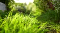 Blurred grass background video
