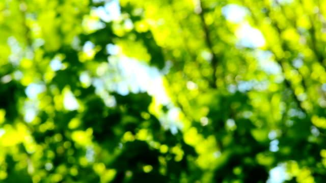 Blurred tree leaves. video