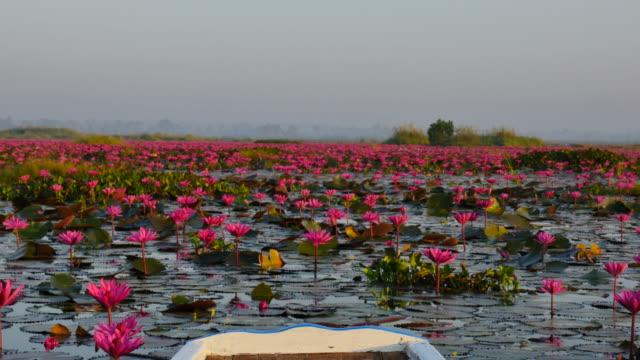 Boat trip at pink lotus lake, Udon Thani Province, Thailand. video