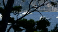 Boats and yachts behind pine tree in Saint-Jean-Cap-Ferrat, French Riviera, France video