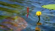 Bobber in the lake video