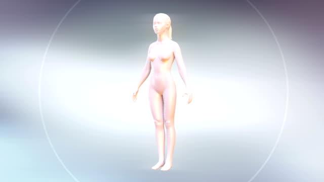 HD: Body Fit video